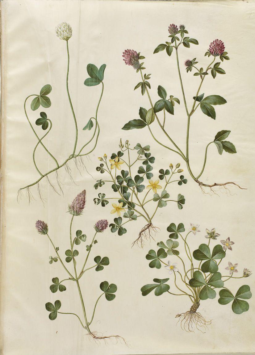 атлас травянистых цветов картинки создания отличается трудоемкостью