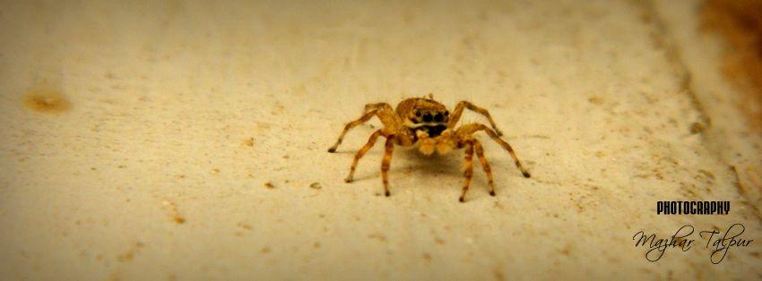 Spider, Village Bhai Khan Talpur, Hyderabad District