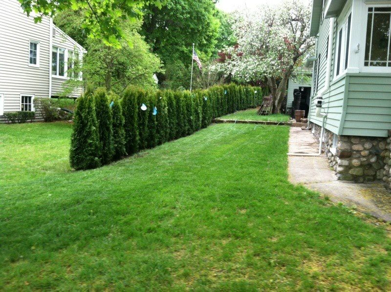 Natural privacy fence best adult cam for Natural privacy fence