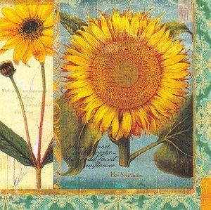 "Paperproducts Bev.nap Helianthus by PaperProducts. $10.98. These Helianthus Paper Beverage Napkins are the perfect cocktail napkins for your next get-together. Paper beverage napkins measure 5"" x 5"" (folded). Napkin pack includes 20 3-ply napkins."