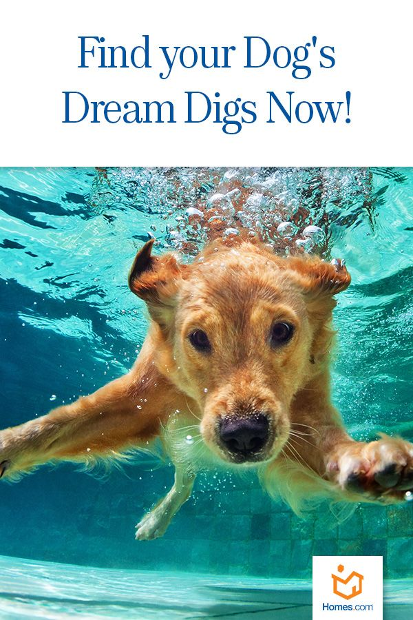 What's your dog's dream 🏠? Find out now! Dog breeds