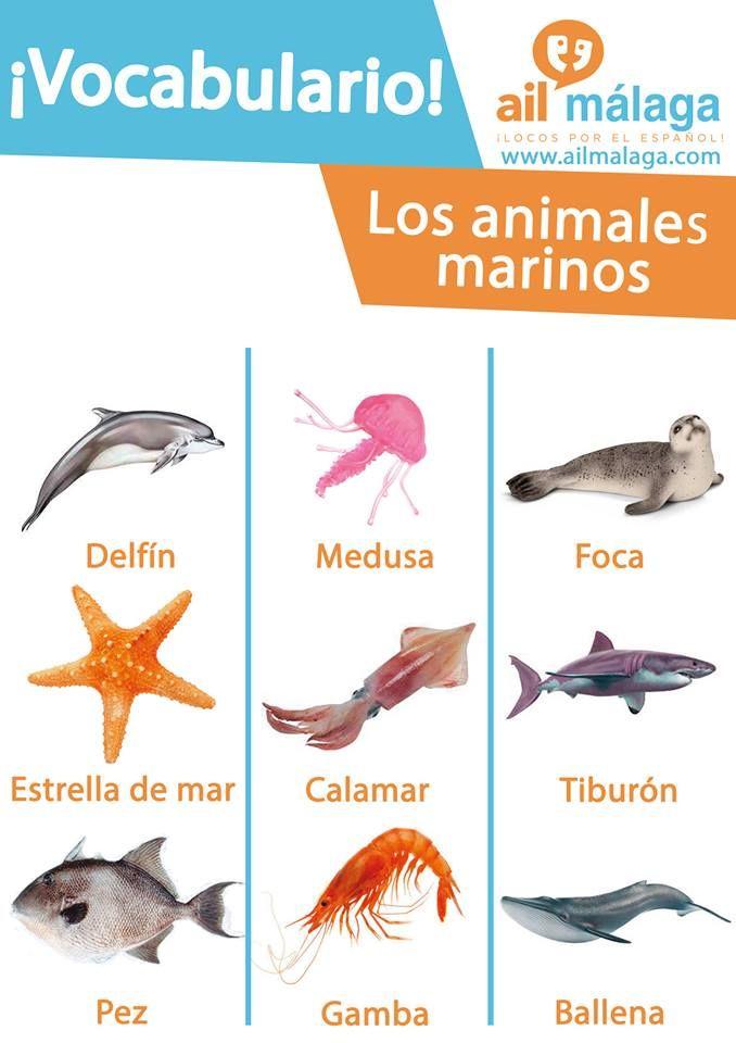 Spanish Vocabulary On Sea Animals Learnspanish Spanishschool Spanishvocab Spanish Vocabulary Learning Spanish Teaching Spanish