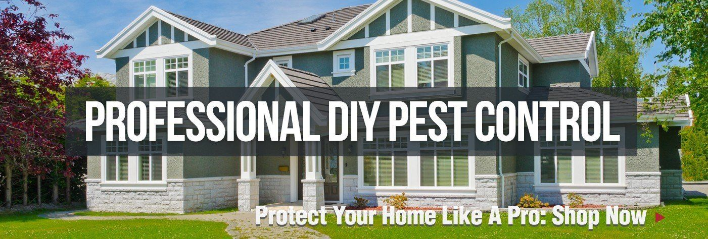 Are you worried about the growth of Pest in your house