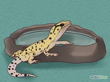 How To Care For A Leopard Gecko With Pictures Wikihow Leopard Gecko Leopard Gecko Cute Gecko