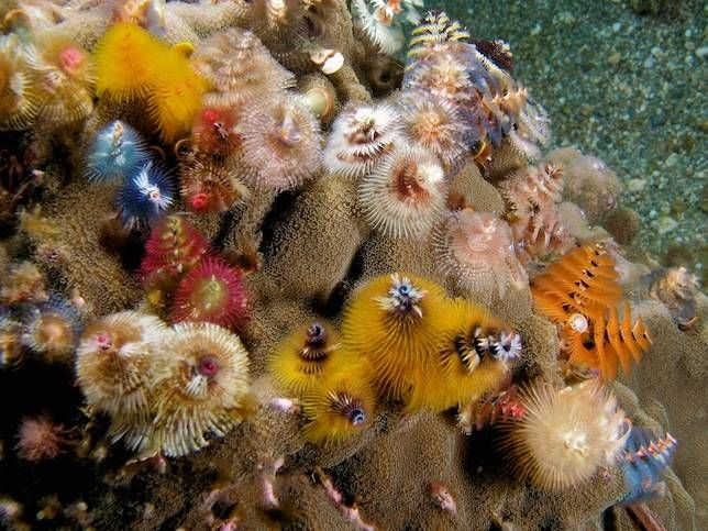 Welcome To The Magical World Of Christmas Tree Worms With Images Sea Creatures Animal Planet