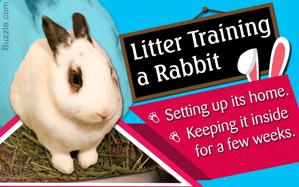 Acquiring knowledge on how to train a rabbit is a breeze