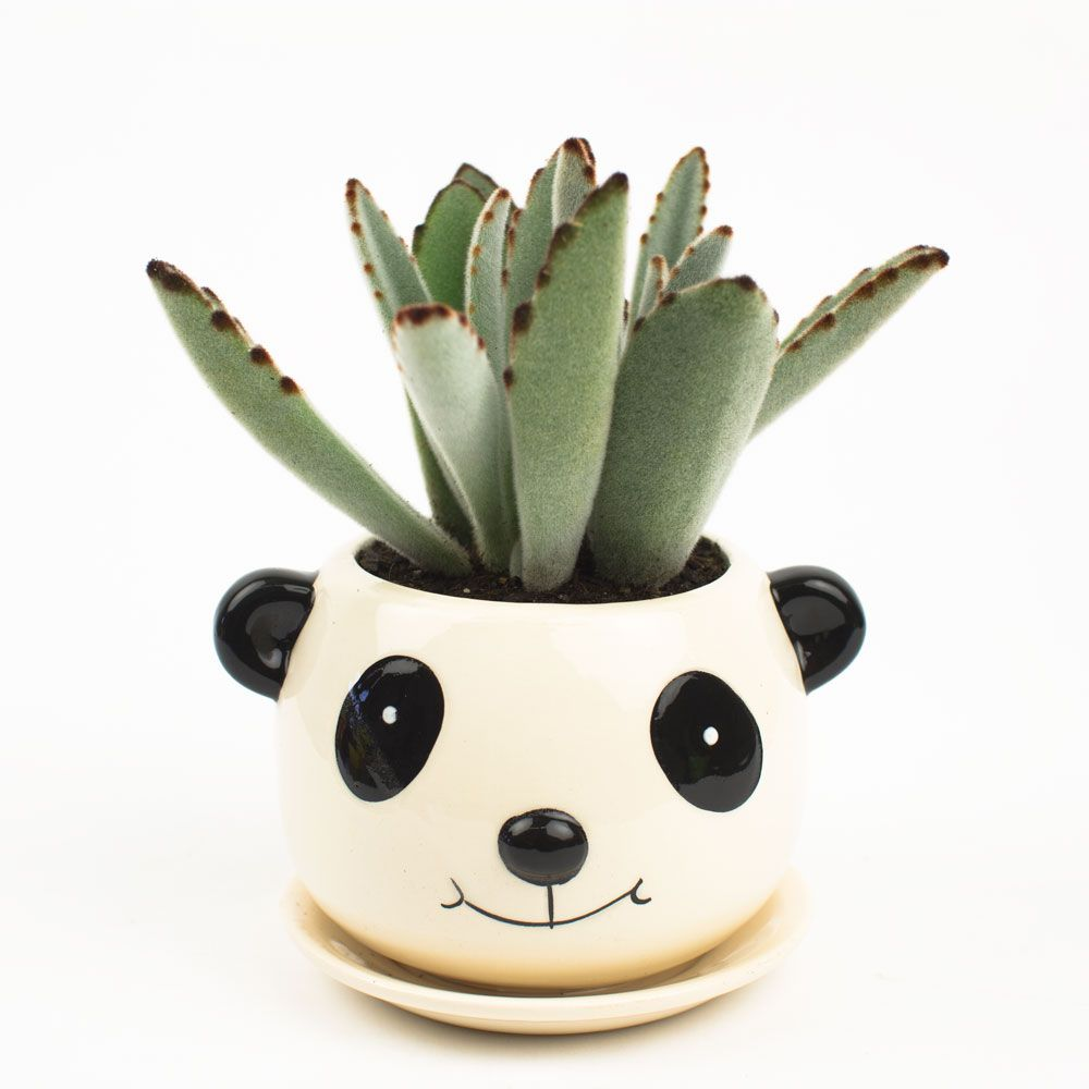 Juicykits Com Is Coming Soon Ceramic Flower Pots Succulents In Containers Animal Planters