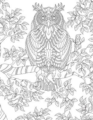 owl coloring pages for adults - Google Search | Owl ...