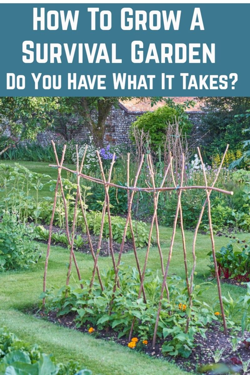 How To Grow A Survival Garden  Do You Have What It Takes  is part of Survival gardening, Planting herbs, Veggie garden, Garden veggies, Backyard garden design, Household plants - Make no mistake, a survival garden is not just any kind of beautiful backyard garden  A survival garden is one that is carefully designed to yield enough crops for you and your family to live off of in times of need  Your survival garden must also provide enough calories for your entire family to not   Read On →