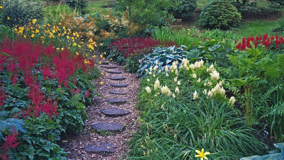 What Is A Bog Garden And How To Create One In 2020 Bog Garden