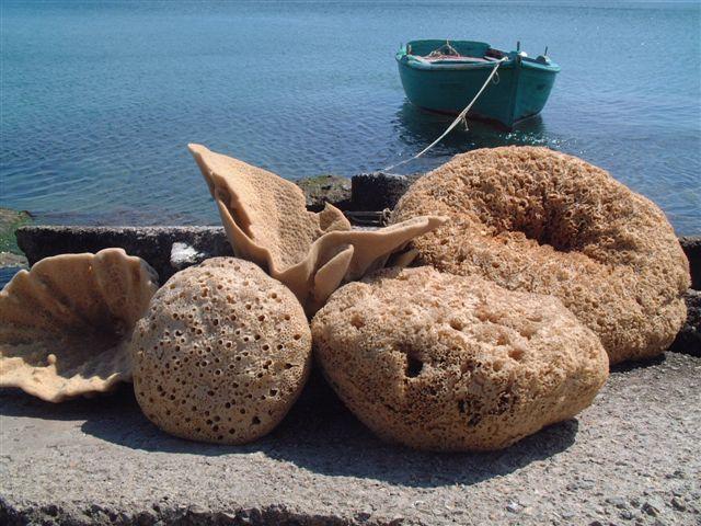 Spons laut dari Kalymnos, Yunani