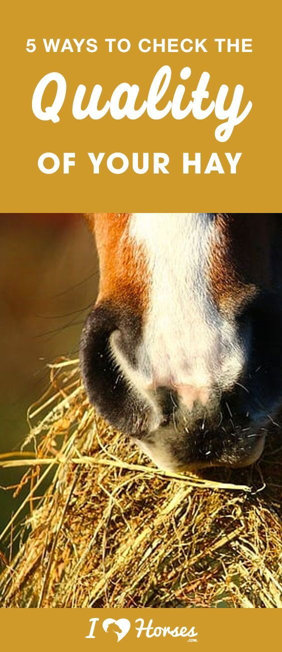 Your horse's diet depends on hay, but did you know that not all hay is the same? When you get a hay delivery, you should take a few minutes to check the hay's quality before you accept and unload the delivery. Click here for 5 useful ways to check the quality of your hay. #hay #horses #horsefeed #horsecare #horsehealth #countrylife #farm