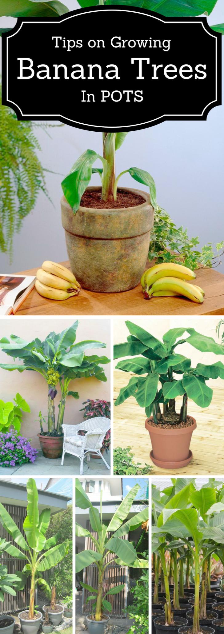 Flower Gardening Tips And Tricks against Gardening Tips Nz ...