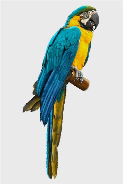 birds custard powder, birds love spray millet, birds 11 ...