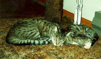 Cats - Cats #cats #cat