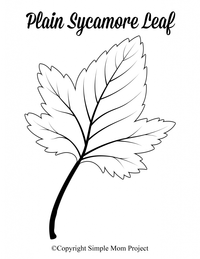 Free Printable Large Leaf Templates Stencils And Patterns Simple Mom Project In 2020 Leaf Template Leaf Stencil Leaf Coloring Page