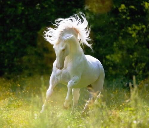 Beautiful white horse - Saphirblau via tumblr - #horse # ...