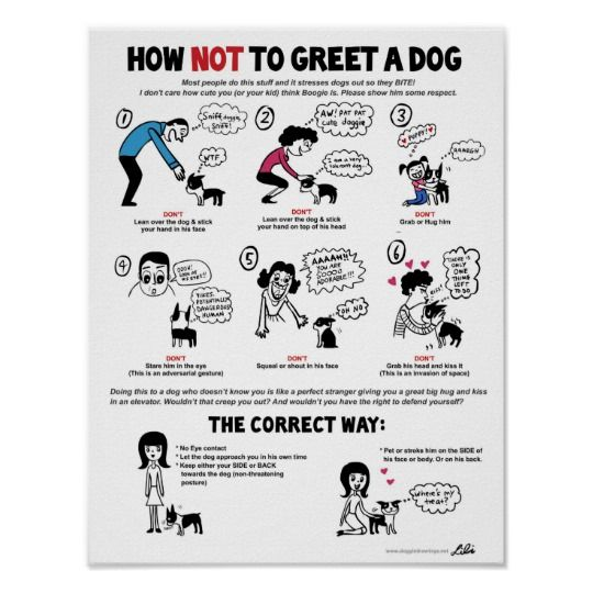 How To Greet A Dog poster (11 x 14