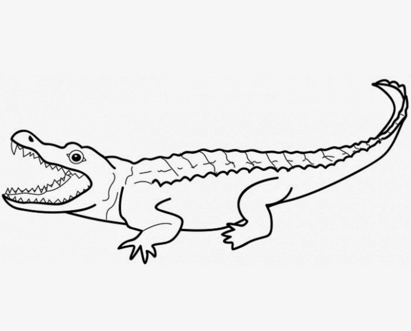 crocodiles colour drawing hd wallpaper  colorful drawings