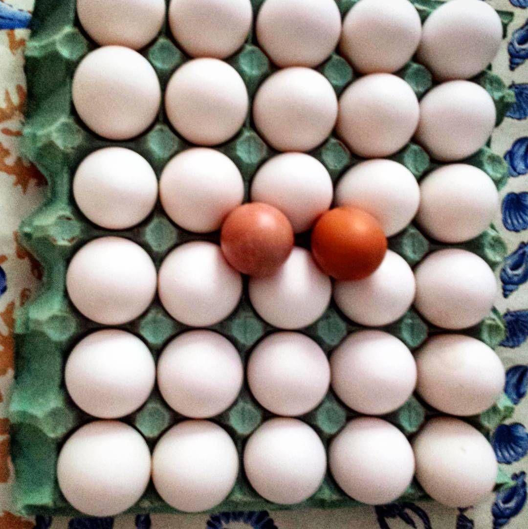Quinta-feira eu sempre fico contente: passa a moça que vende ovos direto da fazenda - são 32 ovos GRANDES por 15 reais!  Abastece minha semana  E caso alguém venha reclamar de ovo e colesteol sugira essa leitura para eles: http://ift.tt/1NXKIrt  #ovos #egg #love #paleo #atkins #keto #primal #lchf #lowcarb #slowcarb #vidasaudavel #barrigadetrigo #semgluten #glutenfree #semlactose #lactosefree #receitaslowcarb #comidadeverdade #instafood #eatrealfood #senhortanquinho #controleseucorpo #diet…
