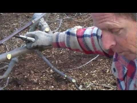 Pruning with Paul Gautschi Part 1 - Back to Eden Garden