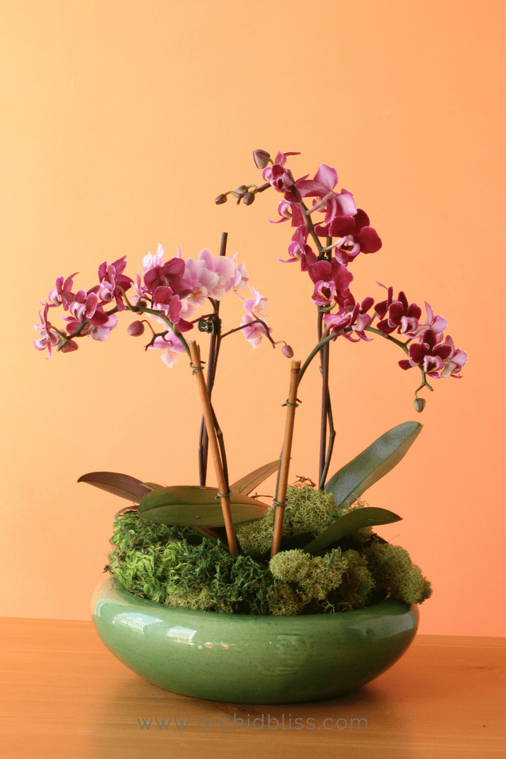 Best Orchid Pots For Healthier Plants and Prettier Displays is part of Orchid pot, Indoor orchids, Orchids, Repotting orchids, Orchid plants, Orchids painting - Need help solving orchid watering problems  You may be surprised to learn that choosing the right orchid pots can solve orchid watering problems