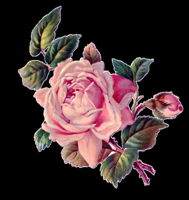 Нарисованные розы открытка, днем рождения начальник