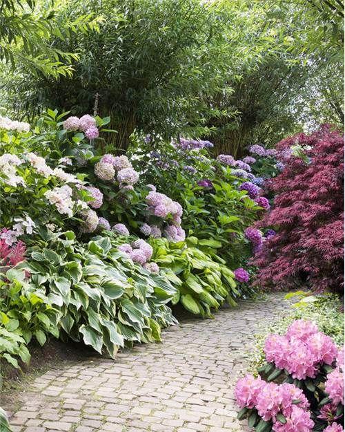 Kit \'Mon jardin d\'ombre\' 7 plantes   庭   Jardin d\'ombre ...