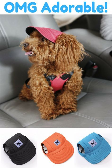 Super Cute Dog Hat | Dog, Toy poodle puppies and Doggies