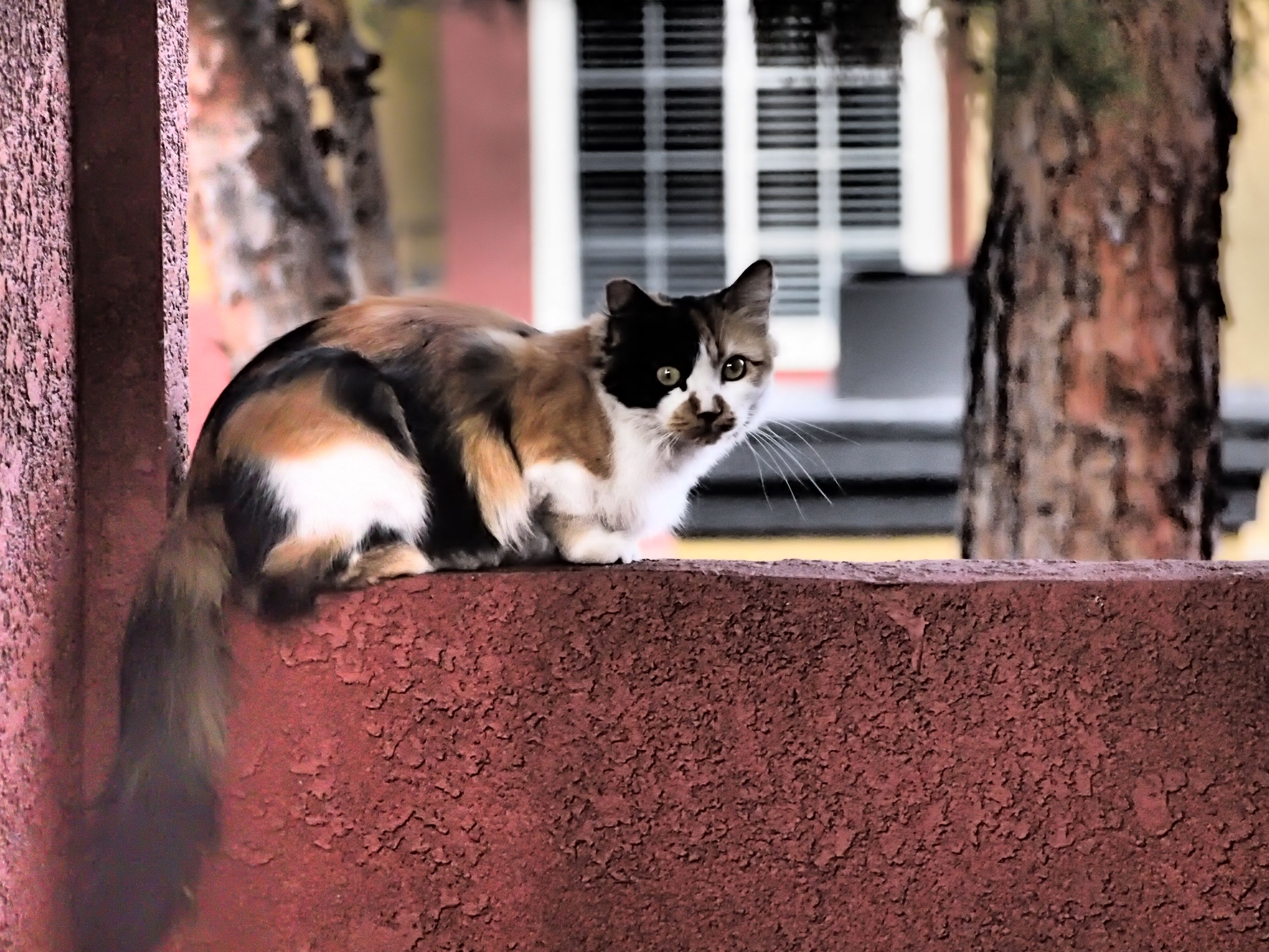 she is one of my strange neighbors this stray cat usually stay