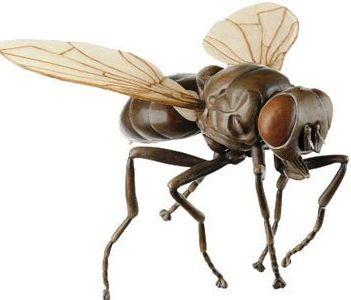 Somso Insects Models http://www.gtsimulators.com/Somso-Insect-Models-s/272.htm #SOMSOZoologyModels #SOMSOInsectModels #InsectModels #SOMSOModels