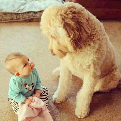 Cute Baby Dogs Cute Animals Cute Dogs