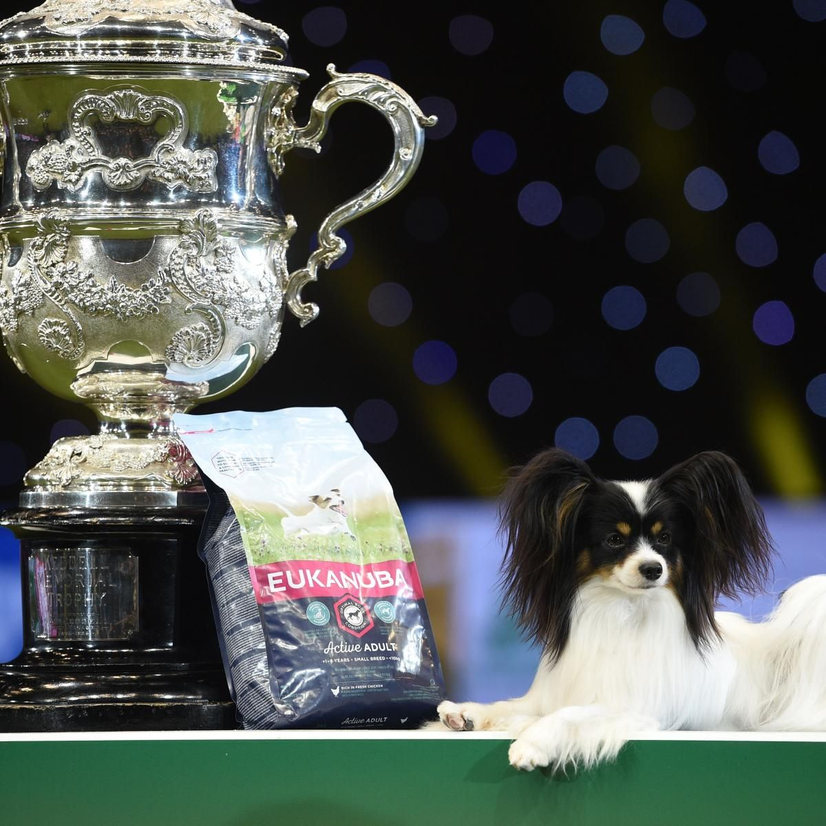 Crufts Dog Show Results 2019 Sunday Winners Top Photos And