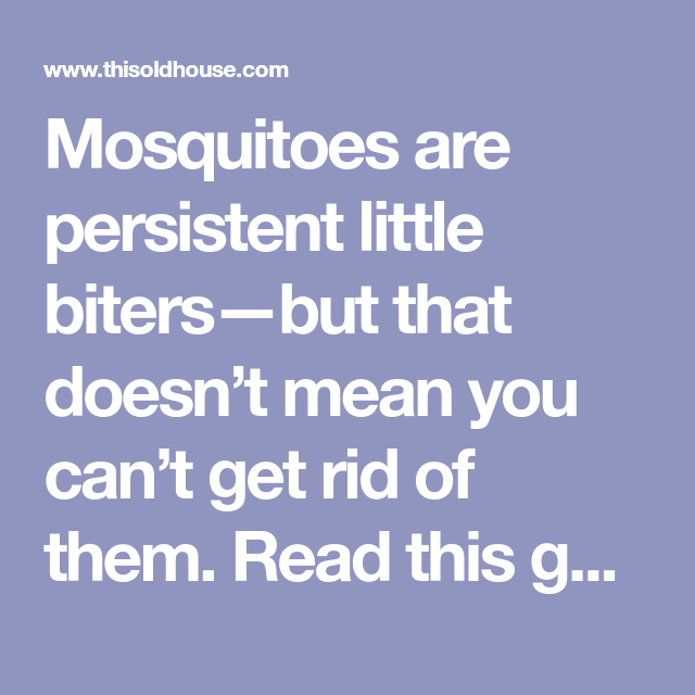 The Best Ways to Get Rid of Mosquitoes in 2020   Organic ...