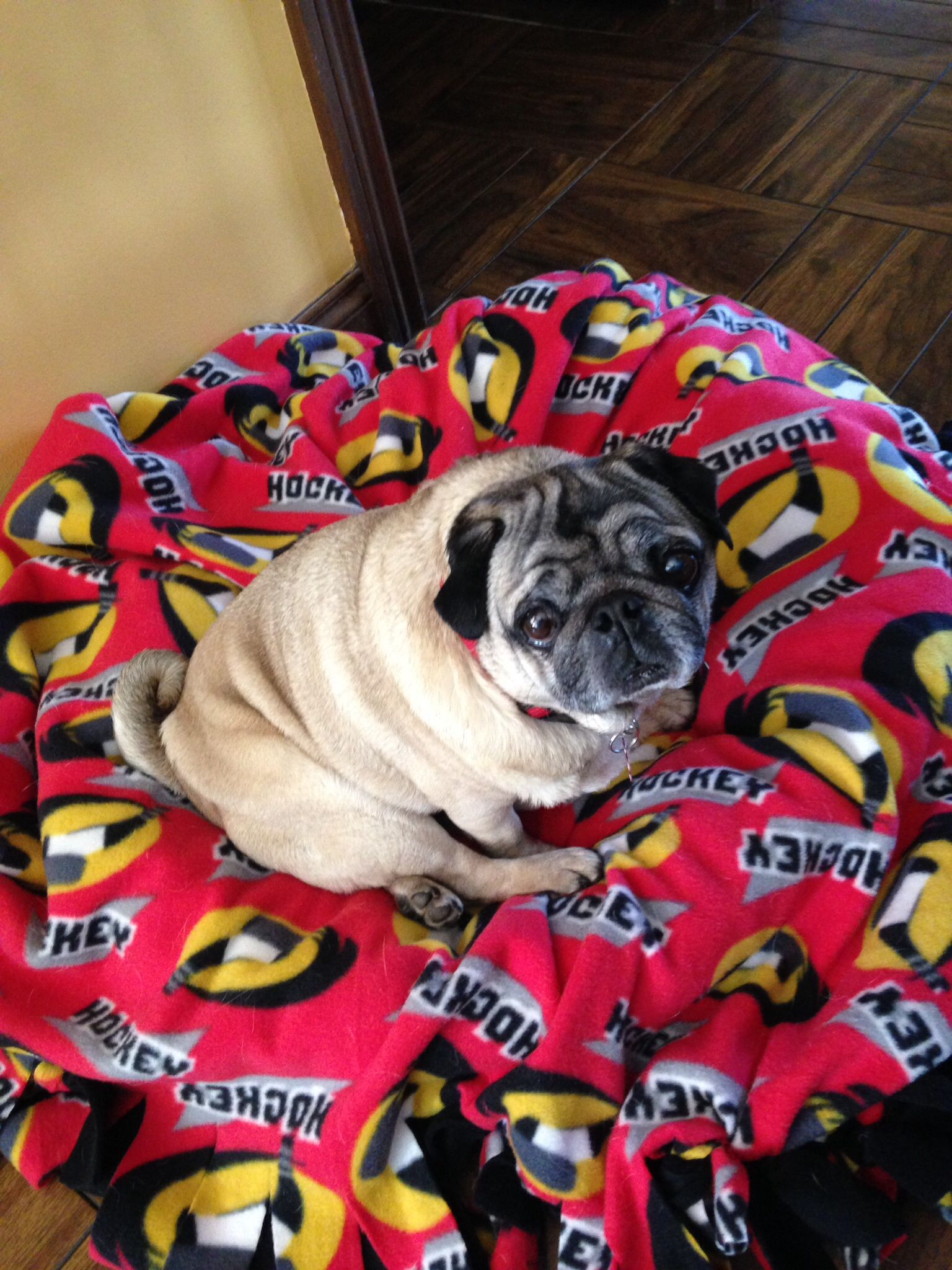 Hello From Otis Pugs Cute Pug Pictures Pug Rescue