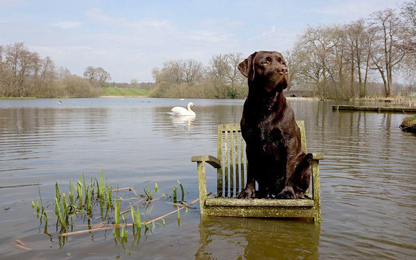 Harry Page dog portraits