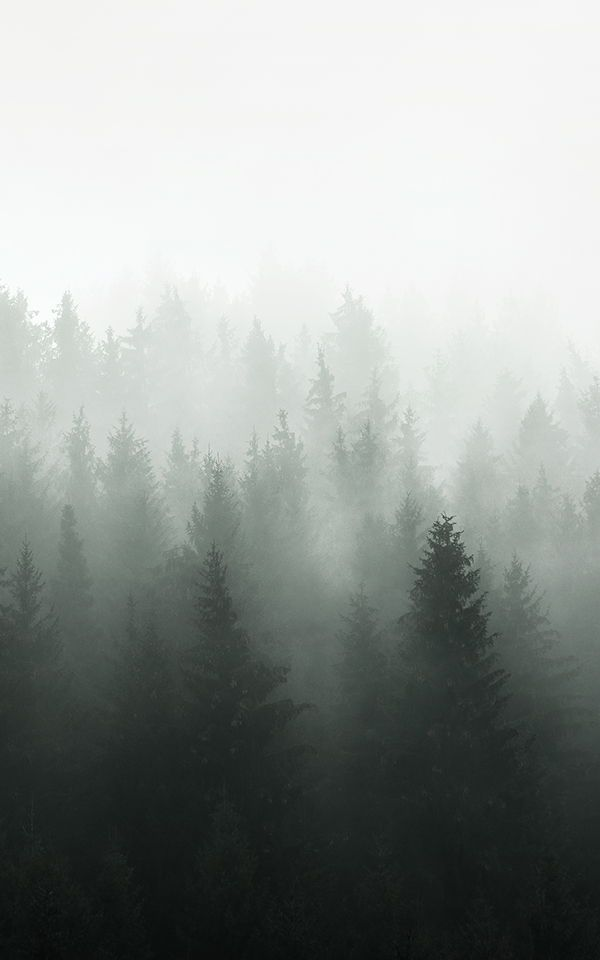 Foggy Forest Photography