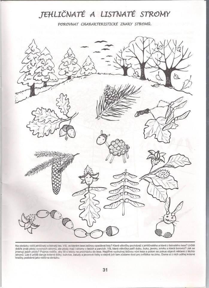 Stromy A Plody Pracovni Listy Montessori Preschool A Autumn