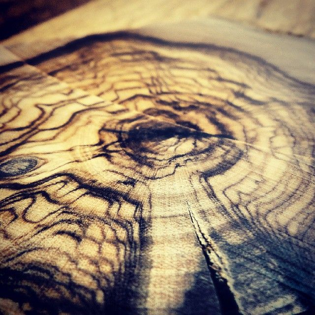 A slice of olive wood