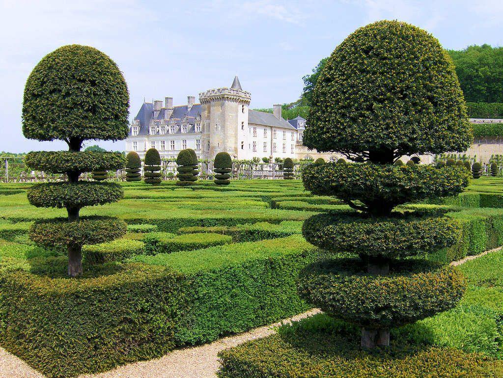 Paysagiste Indre Et Loire topiaire   jardin classique, jardin francais, jardins