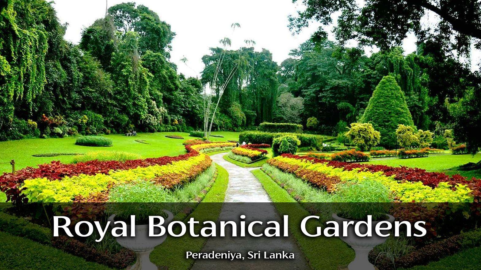 Royal Botanical Garden Peradeniya Botanical Gardens Botanical Garden
