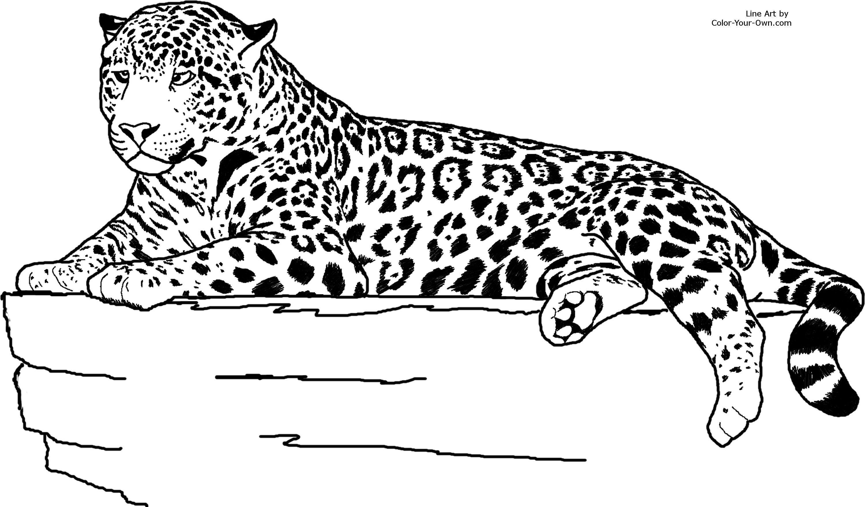 Realistic Animal Jaguar Coloring Pages