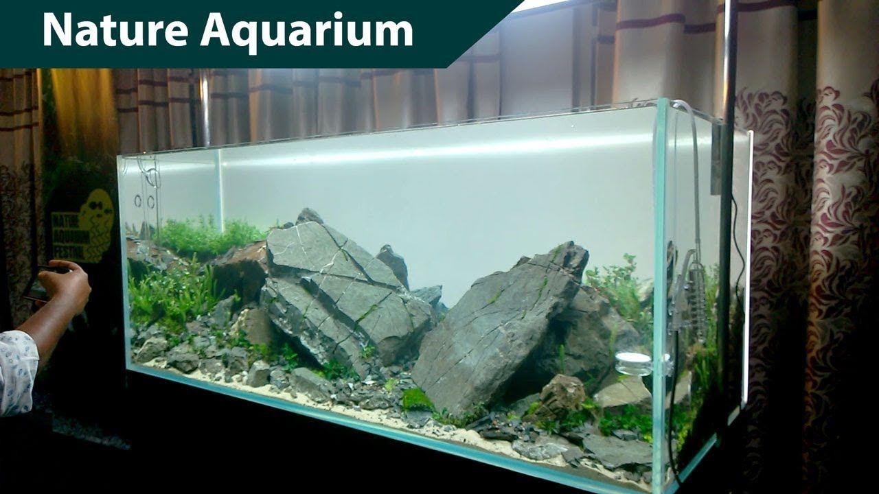 Pin On Aquariums