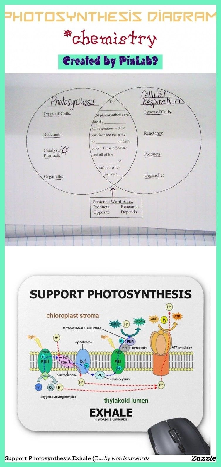 photosynthesis diagram in 2020 Photosynthesis