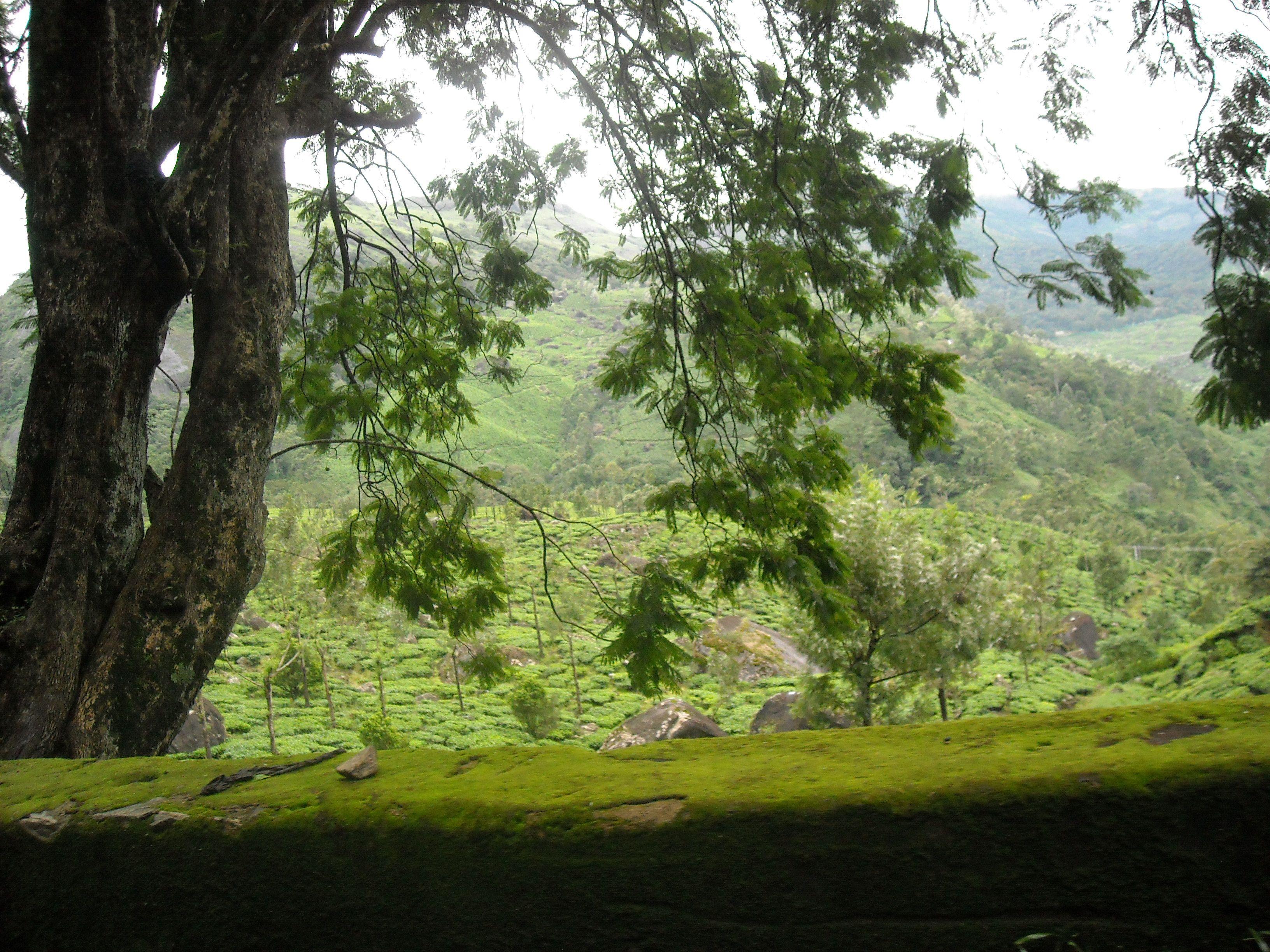 Picturesque Kerala Picturesque, Kerala, Trip