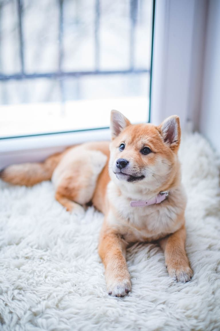 A Brief History Of Dog Training Pets Dogs Best Apartment Dogs