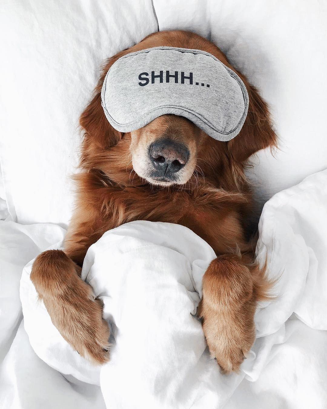 pet sitting insurance cutepuppies (con imágenes) Perros
