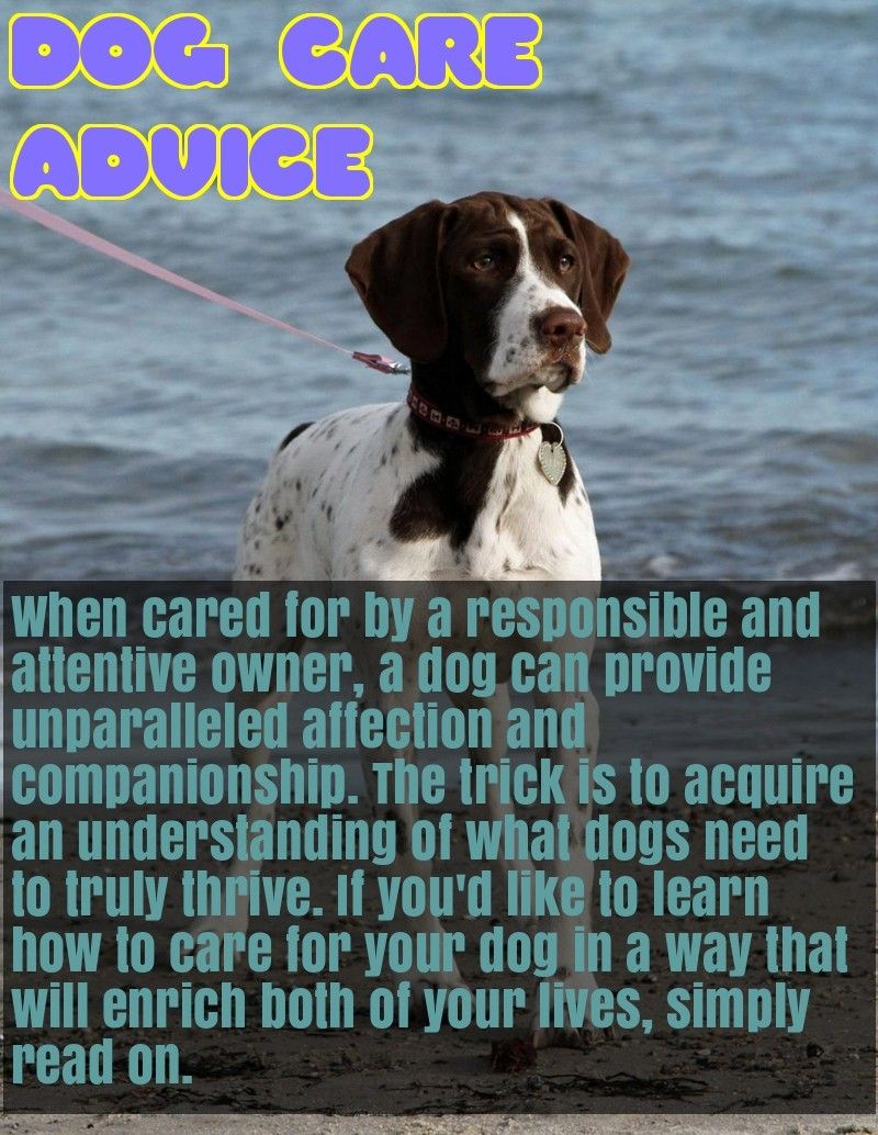 Want Advice On Dogs, This Is For You Dog care, Dogs, Dog