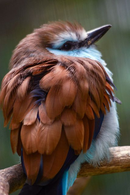 My Misty Morrning Med Billeder Smukke Fugle Billeder Farvestralende Fugle