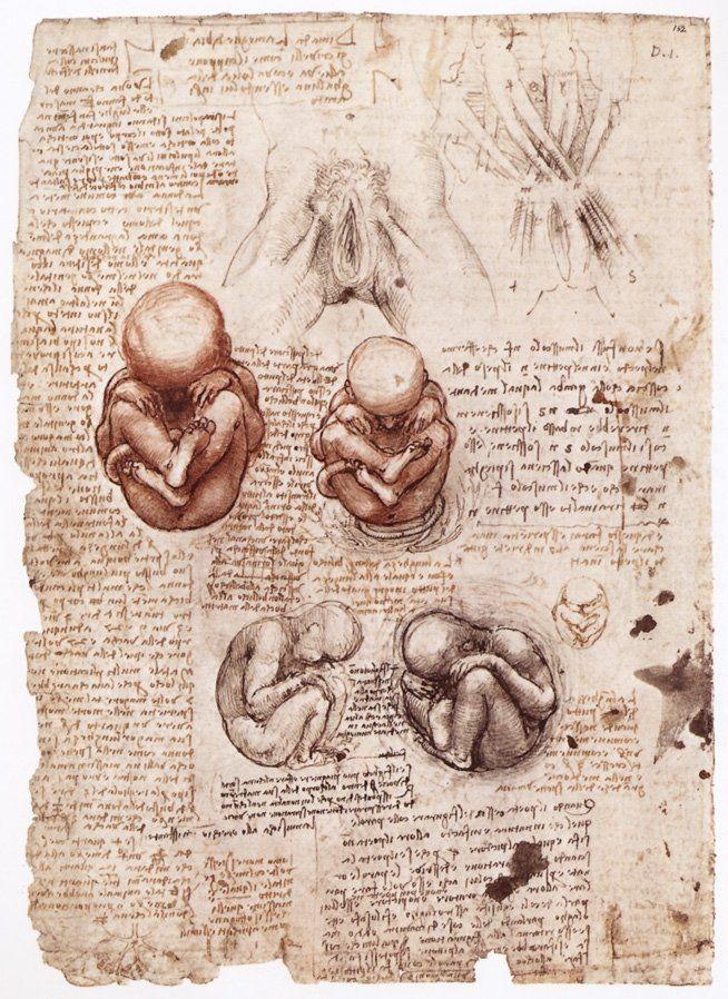 Leonardo da Vinci, studi anatomici...<3k<3   Einstein, Tesla ...